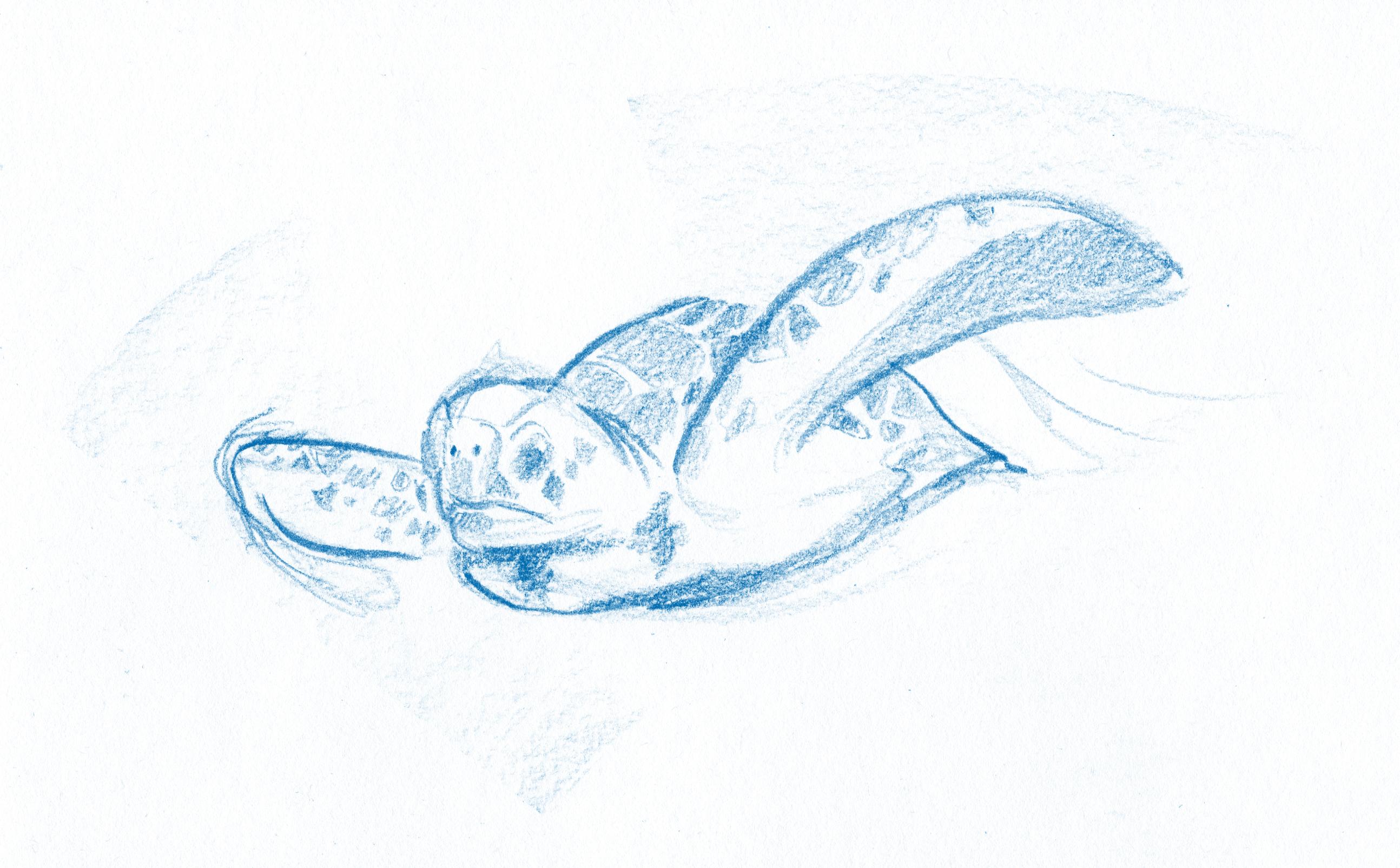 06 La tartaruga